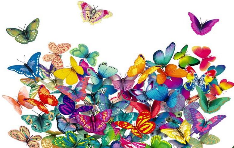 Envol e de papillons le 18 d cembre 2013 nos tout petits de la r union - Images de papillon ...